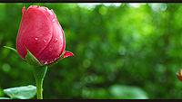 gambar-pemandangan-bunga.jpg